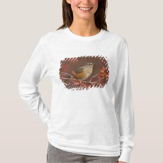 T-shirt Américain féminin Robin dans l'aubépine noire