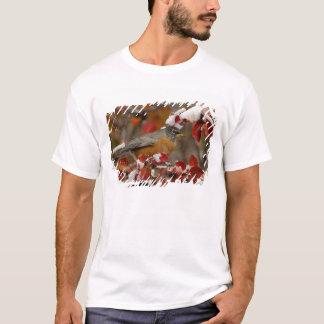 T-shirt Américain masculin Robin dans l'aubépine noire