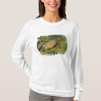 T-shirt Américain masculin Robin mangeant l'arbre de