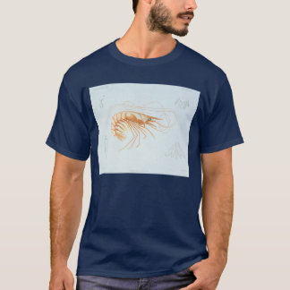 T-shirt Anatomie vintage de crevette, animaux d'océan
