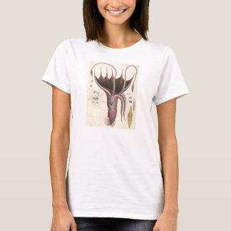 T-shirt Animaux vintages d'espèce marine, calmar de