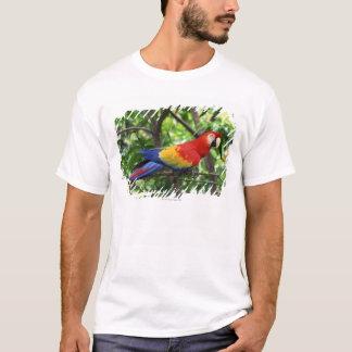 T-shirt Ara d'écarlate sur le membre d'arbre