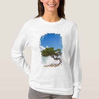 T-shirt Arbre de Divi Divi, plage d'Eagle, Aruba, des