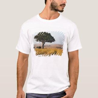 T-shirt Arbre simple d'acacia sur les plaines herbeuses,