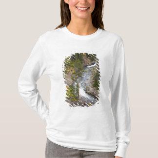 T-shirt Arbres 14 de rivière et de tremble de Provo