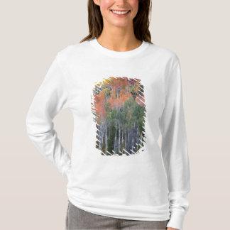 T-shirt Arbres 16 de rivière et de tremble de Provo