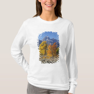 T-shirt Arbres d'Aspen avec la gamme de montagne de Teton