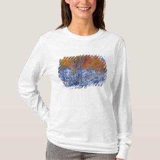 T-shirt Arbres d'Aspen dans des couleurs d'automne,