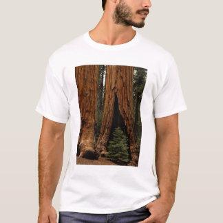 T-shirt Arbres de séquoia, parc national de séquoia