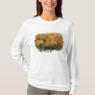 T-shirt Arbres d'érable dans des couleurs d'automne, près