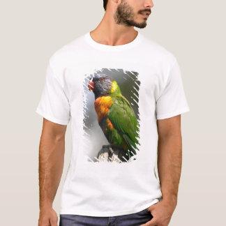 T-shirt Arc-en-ciel Lorikeet (haematodus de Trichoglossus