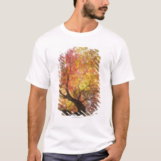T-shirt Automne