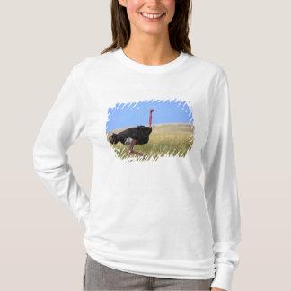 T-shirt Autruche masculine dans le plumage d'élevage,