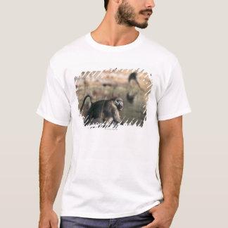 T-shirt Babouins de Chacma (ursinus de Papio) marchant