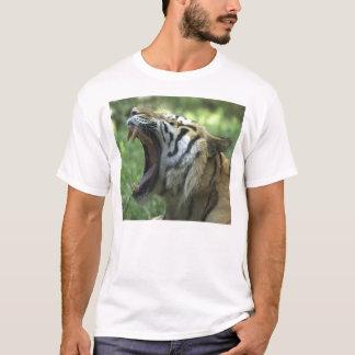 T-shirt bâillement de tigre
