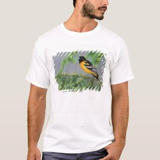 T-shirt Baltimore Oriole masculin, galbula d'Icterus, mâle