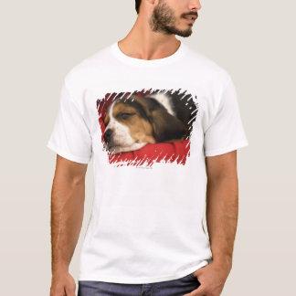 T-shirt Bashaw, Alberta, Canada