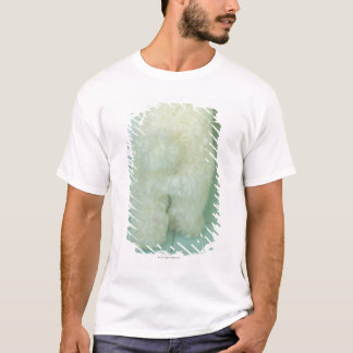 T-shirt Basse vue de section d'un caniche miniature