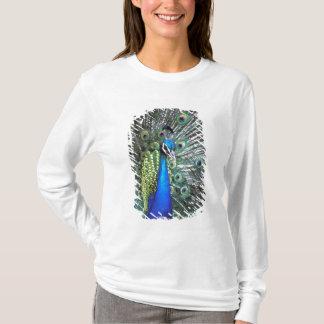 T-shirt Beau paon écartant les plumes colorées
