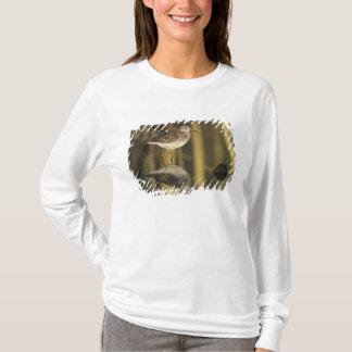T-shirt Bécasseau en bois, glareola de Tringa, adulte,
