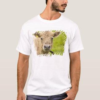 T-shirt Bétail dans un pâturage