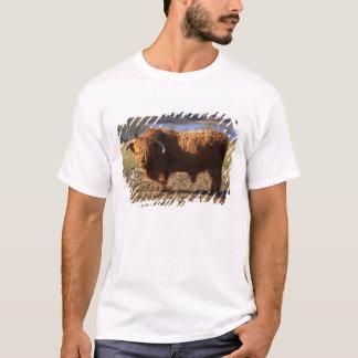 T-shirt Bétail des montagnes Taureau, Ecosse
