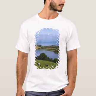 T-shirt Bétail du Holstein-Fresian, baie de Bantry, liège