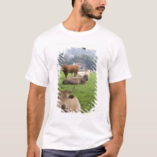 T-shirt Bétail sur les terres cultivables rurales près de