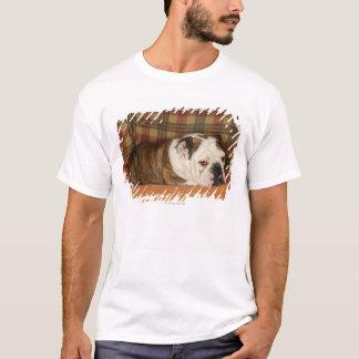 T-shirt bouledogue se trouvant sur un sofa