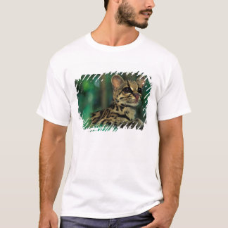 T-shirt CA, Panama central, Soberania NP, Margay