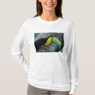 T-shirt CA, Panama, île de Barro le Colorado,