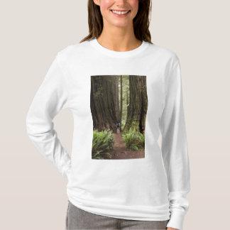 T-shirt CA, parc d'état de séquoias de Jedediah Smith,