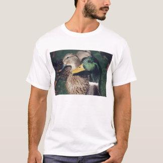 T-shirt canards