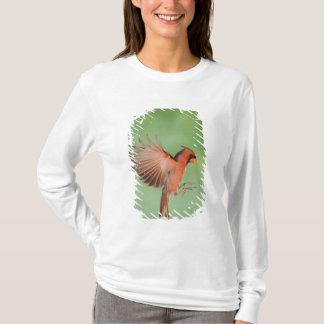T-shirt Cardinal du nord, cardinalis de Cardinalis, mâle 2