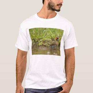 T-shirt Cardinal du nord dans l'étang de jardin,