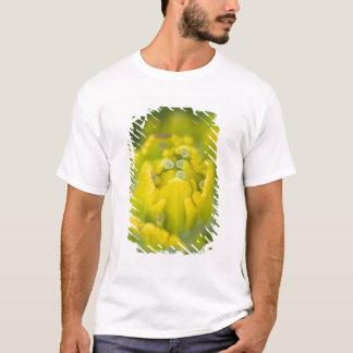 T-shirt Castilleja d'or indien 2 de pinceau