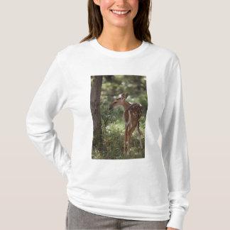 T-shirt cerfs communs Blanc-coupés la queue, virginianus