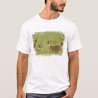 T-shirt Cerfs communs de Chital et jeunes, ressortissant