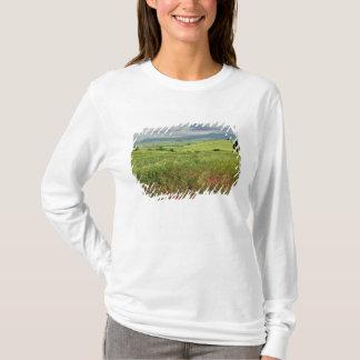 T-shirt Champ agricole, région de la Toscane de l'Italie