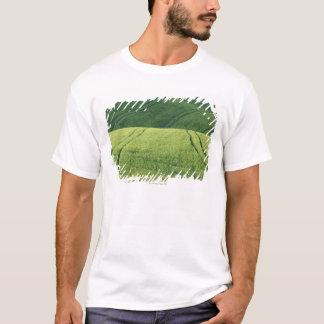 T-shirt Champ de blé avec des voies de pneu, Pienza, Val