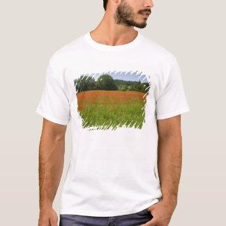 T-shirt Champ de pavot, Chiusi, Italie