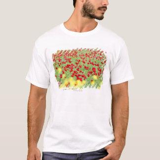 T-shirt Champ de pavot, Sienne, Italie