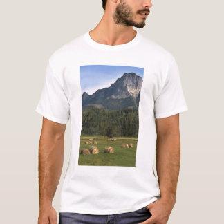 T-shirt Champs avec le foin écopé, Alberta, Canada