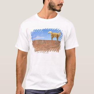 T-shirt Chat de gingembre se tenant sur le mur de briques