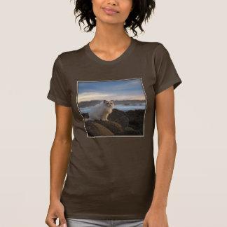 T-shirt Chat de Ragdoll à la plage