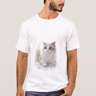 T-shirt Chat de Ragdoll sur le clavier d'ordinateur