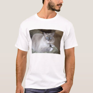 T-shirt Chat femelle de Ragdoll