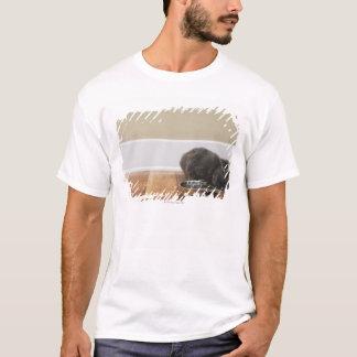 T-shirt Chat mangeant de la cuvette