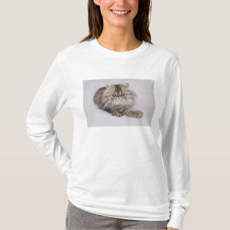 T-shirt Chat persan, catus de Felis, chat tigré de Brown,