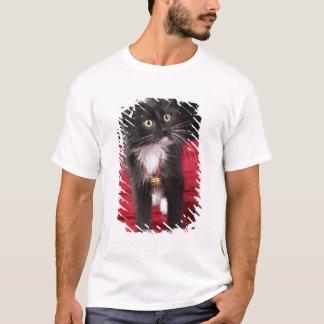 T-shirt Chaton aux cheveux courts noir et blanc, 2 mois de